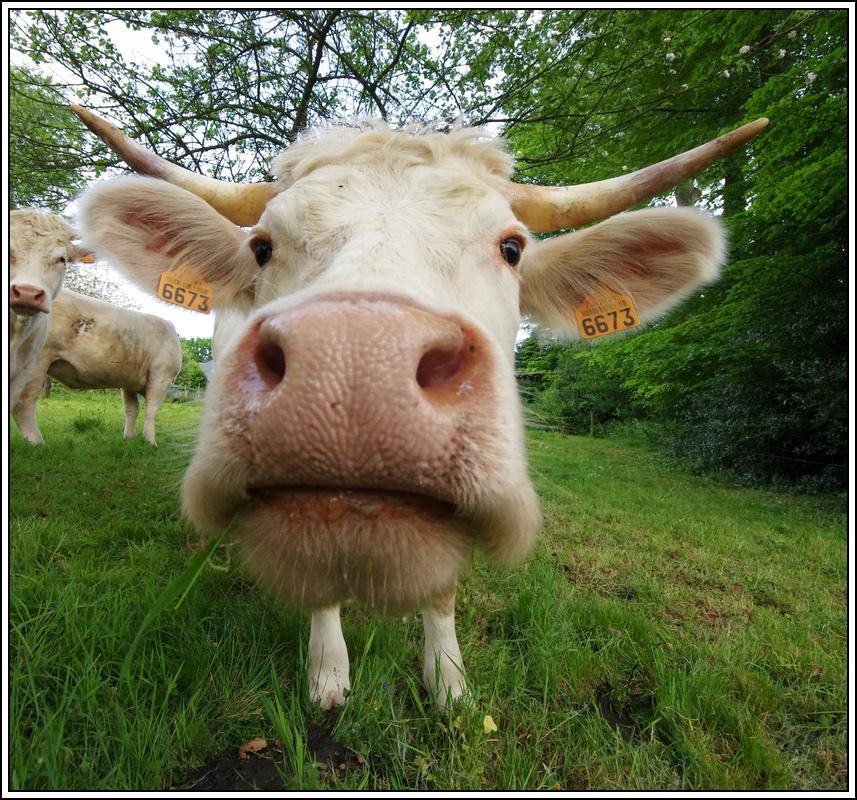 Sortie en Normandie avec des falaises, la mer, les vaches .... - Page 2 K5008090