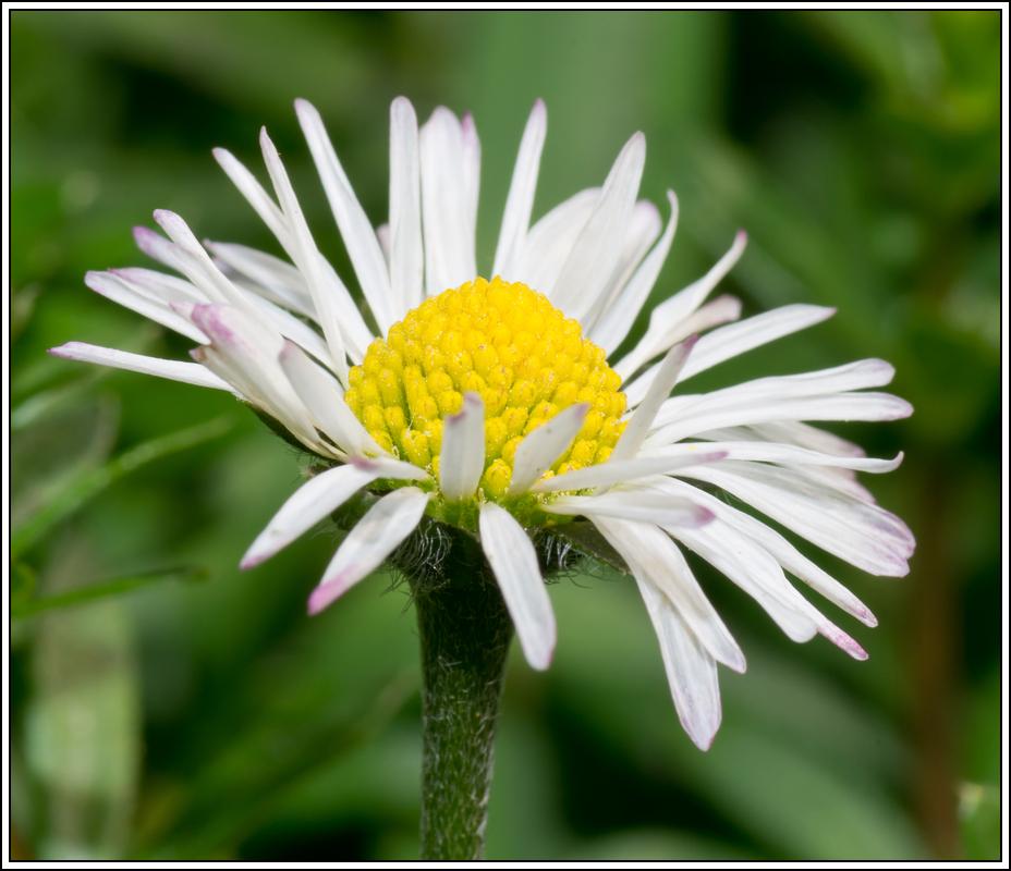 C'est le printemps, la saison des fleurs K5A15411