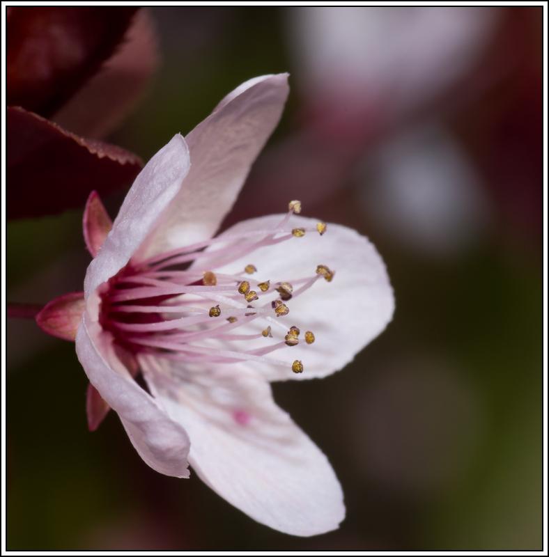 C'est le printemps, la saison des fleurs K5A15414