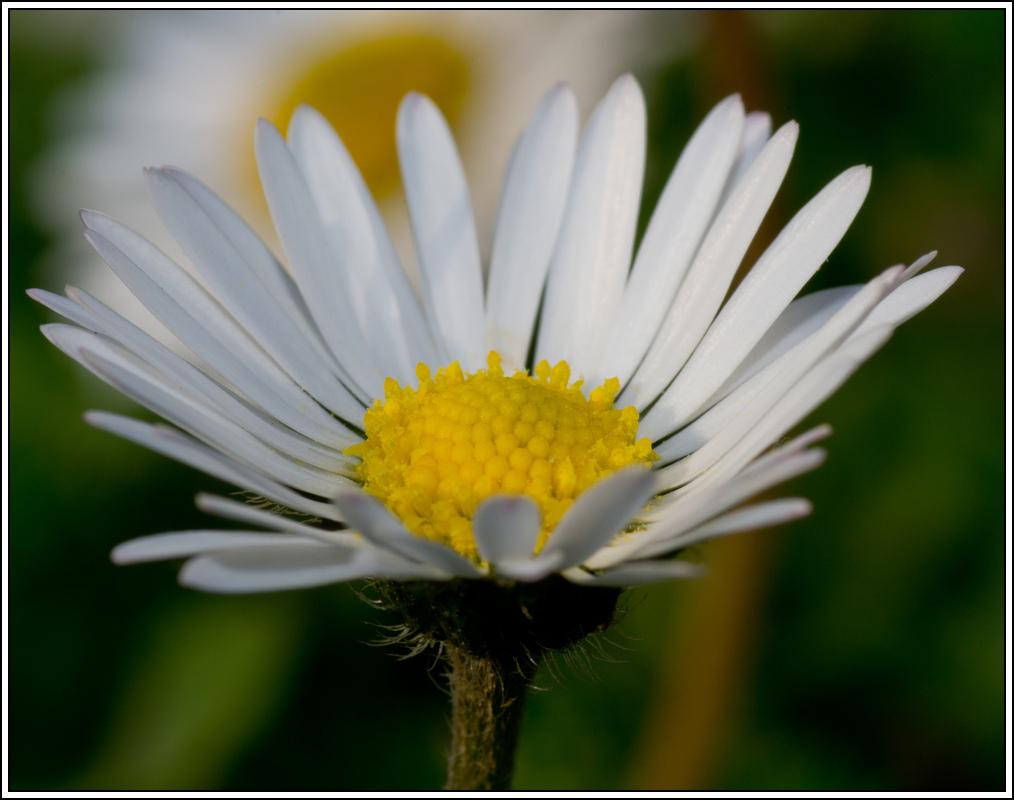 C'est le printemps, la saison des fleurs K5A15419