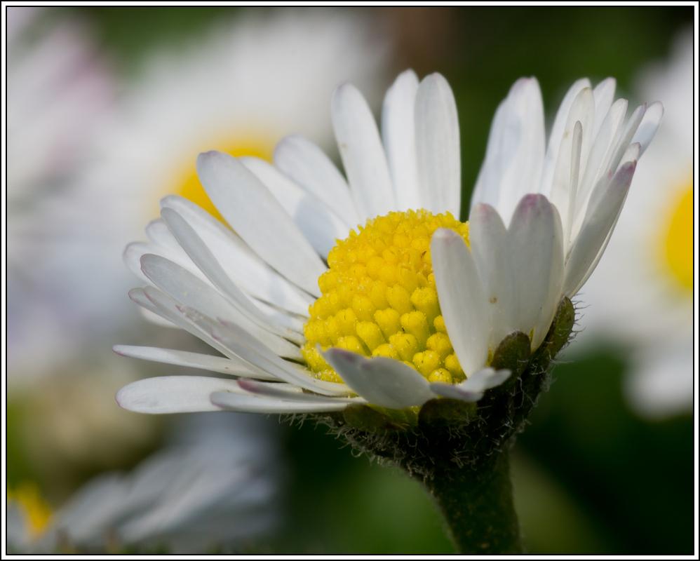 C'est le printemps, la saison des fleurs K5A15420