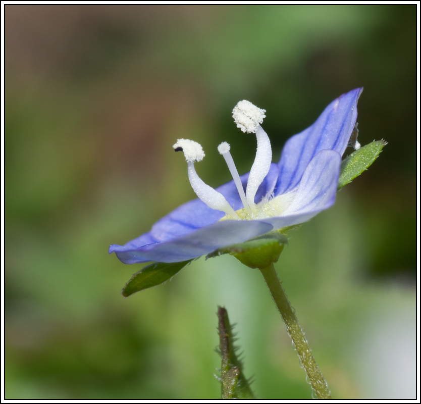 C'est le printemps, la saison des fleurs K5A15424