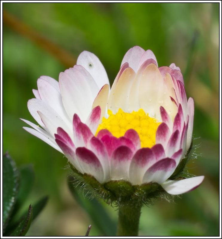C'est le printemps, la saison des fleurs K5A15435